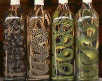 Rượu rắn và những lo ngại