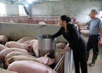 Tín dụng chính sách góp phần xây dựng nông thôn mới