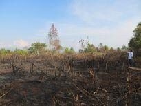 Gần 300 người chặt phá rừng sao