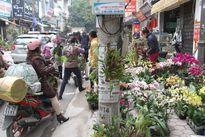 Ngắm 'suối hoa' rực rỡ trên phố Hoàng Hoa Thám đón Tết