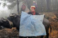 Bộ NN&PTNT chỉ đạo chống rét cho trâu, bò
