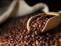 Bản tin thị trường cà phê ngày 29/1