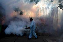 Châu Mỹ hối hả chống virus Zika gây teo não bào thai