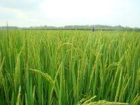 Tiến Nông: Ứng dụng công nghệ tiên tiến giúp nông dân tăng năng suất