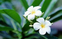 Cách dâng hoa, ý nghĩa và những lưu ý khi dâng hoa trên ban thờ ngày Tết Bính Thân 2016