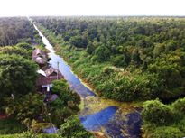Khám phá đất rừng U Minh Hạ, Cà Mau