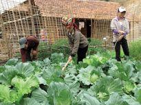 Tiếp tục Dự án điều chỉnh di dân, tái định cư thủy điện Tuyên Quang