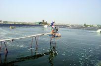 Móng Cái, Quảng Ninh: Đẩy mạnh nuôi trồng thủy sản theo hướng thâm canh