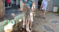 """Vật lộn 2 giờ đưa cá """"khủng"""" nặng gần nửa tạ, dài 1,7m lên bờ"""