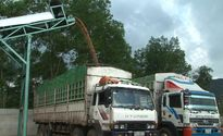 Xưởng gỗ dăm trái phép ở Nghệ An: Trên bảo dưới không nghe