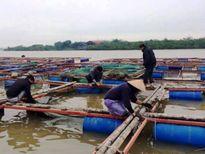 Rét đậm ngành nuôi trồng thủy sản Hà Tĩnh thiệt hại hơn 14 tỷ đồng