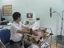 Điều trị bệnh viêm ruột cấp tính ở chó