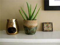 Mang không khí thiền vào nhà với 10 loại cây xanh