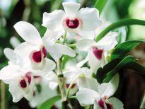 Những loài hoa Tết mang lại may mắn cho cả gia đình
