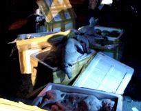 300 kg thịt chó không rõ nguồn gốc trên xe khách