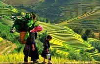 Sa Pa, Lào Cai: 'thiên đường hạ giới' qua ống kính bốn mùa