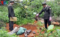 Tiêu hủy 19 cá thể tê tê Java đang phân hủy