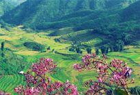 7 thung lũng đẹp như mơ để du xuân