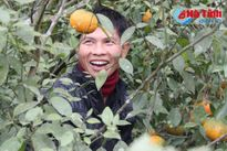 Cam bù Hương Sơn ra chợ Tết