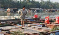 Cá chết trên sông Cái Vừng An Giang vẫn tiếp tục lan rộng