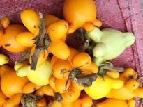 Trái dư chứa các chất cực độc chết người có mặt trên mâm ngũ quả