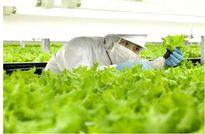 Lần đầu tiên các nhà khoa học chế tạo được robot làm nông nghiệp