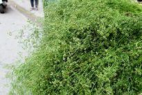 Phong tục tắm lá mùi vào chiều 30 Tết không đơn giản là để cho thơm