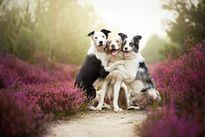 Khoảnh khắc tuyệt đẹp của những chú chó khi ngày xuân về
