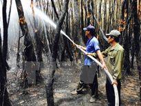 Đang xảy ra cháy rừng thuộc khu vực Vườn quốc gia Hoàng Liên