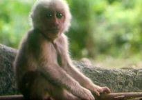 NSƯT Vương Đức & câu chuyện về chú khỉ trong phim