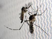 Trung Quốc xác nhận ca nhiễm vi rút Zika đầu tiên