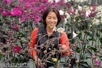 """Đôi vợ chồng """"gàn"""" ở Bắc Ninh trồng lan công nghệ cao"""