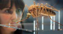 Virus Zika đang tồn tại có thể kéo lùi nhân loại 2 triệu năm