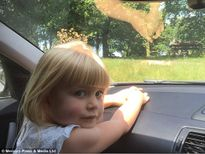 Người lớn thẹn thùng chứng kiến đôi khỉ 'vui vẻ' trên nắp ca-pô xe hơi