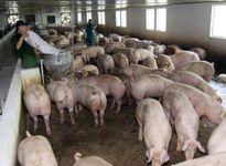 Báo động về tình trạng lạm dụng thuốc kháng vi sinh vật trong chăn nuôi