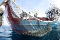 Cử nhân, ngư dân và tàu cá