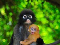 Chiêm ngưỡng 10 loài khỉ có vẻ ngoài độc đáo nhất thế giới