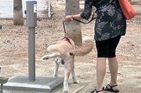 Đã nuôi chó, phải biết tôn trọng hàng xóm!