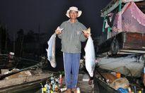 Lượng cá bông lau giảm mạnh