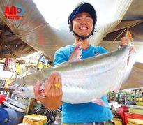 Bắt dính cá bông lau to