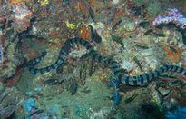 Những loài rắn chỉ nghe tên đã sợ mất mật (2)