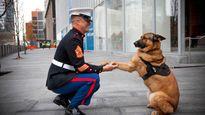 Quân khuyển Mỹ ba chân được tặng huân chương