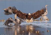 15 bức ảnh tuyệt đẹp về những loài chim hoang dã