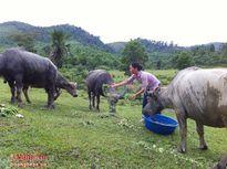 'Chăn nuôi sinh thái', thu lãi 300 triệu/ năm