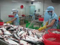 Hoa Kỳ cảnh báo cá da trơn Việt Nam nhiễm kháng sinh cấm