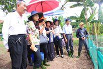 Tìm ra thuốc hỗ trợ điều trị ung thư từ thảo dược ở Việt Nam