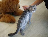 Những vật nuôi có bộ lông thời trang nhất quả đất