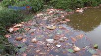 Khu Công nghiệp Phố Nối A, Hưng Yên: Dân lao đao vì ô nhiễm môi trường