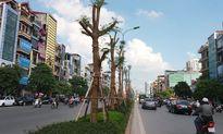 Sẽ xanh ngát những con đường Hà Nội