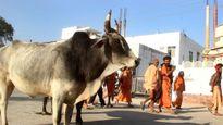 Ấn Độ muốn thành lập bộ Bò